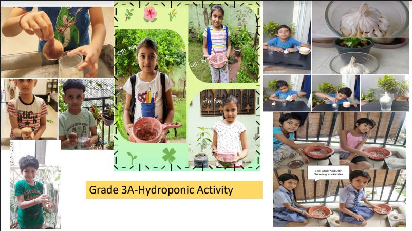 Eco Club Activity on Hydroponics-2020